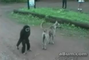 Monkey Plays With Dog