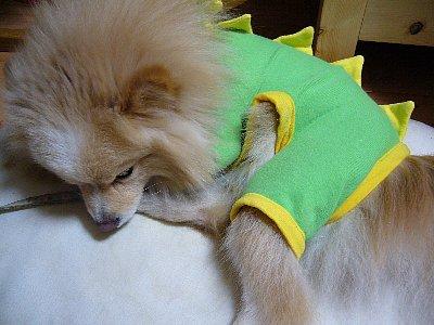 ジンー服ー恐竜ー寝てる