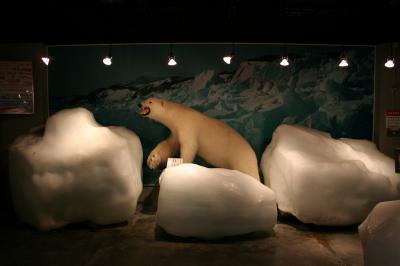 白くまと流氷