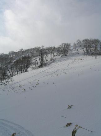 20080131013.jpg