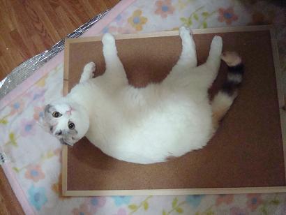 cat 010