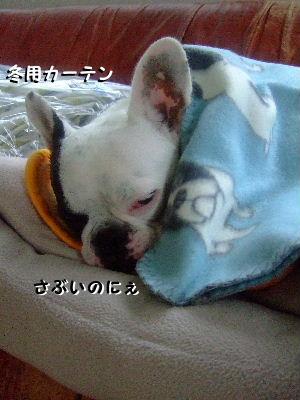 パイド毛布