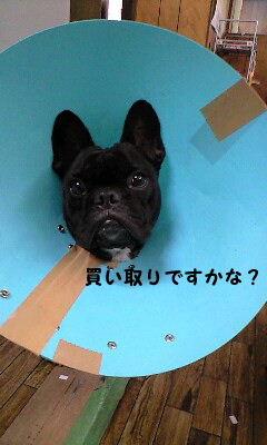 CAHI48KD.jpg