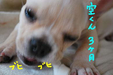 20090924DSC_0883.jpg