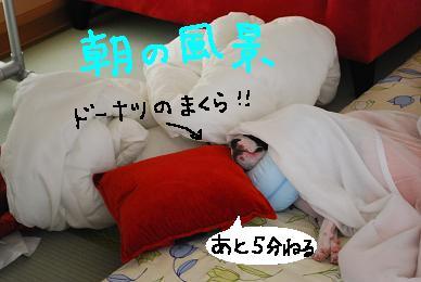 20091001DSC_1152.jpg