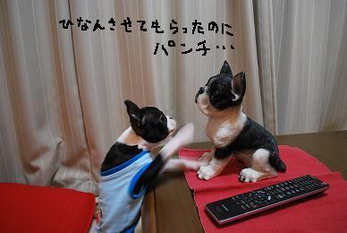 20091029DSC_2162.jpg