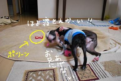 20091031DSC_2278.jpg