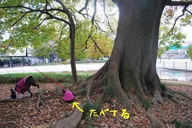 20091112DSC_2745.jpg