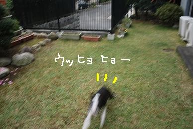 20091114DSC_2783.jpg