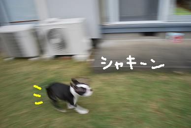 20091114DSC_2787.jpg