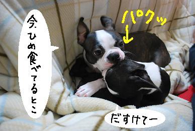 20091127DSC_3246.jpg