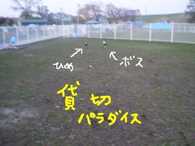 20091128PA010146.jpg