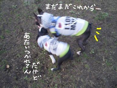 20091128PA010151.jpg