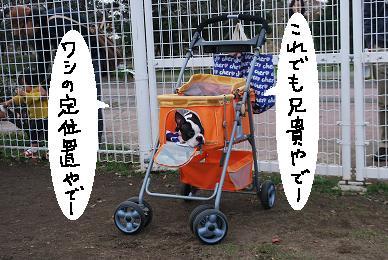 20091201DSC_3402.jpg