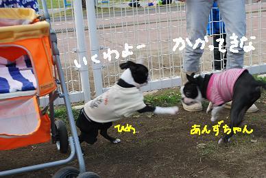 20091201DSC_3437.jpg