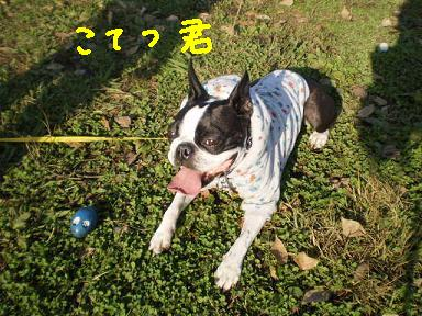 20091203PA050160.jpg