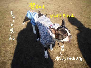 20091208PA110191.jpg