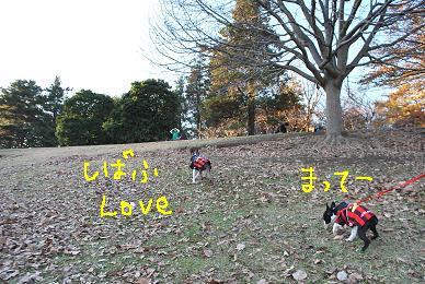 20091210DSC_3707.jpg
