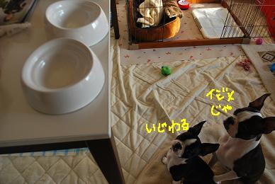 20091211DSC_3788.jpg