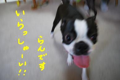 20091214DSC_3818.jpg