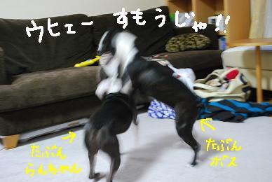 20091214DSC_3886.jpg