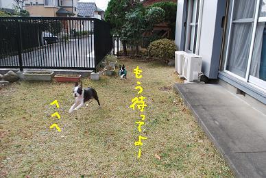 20091216DSC_3961.jpg