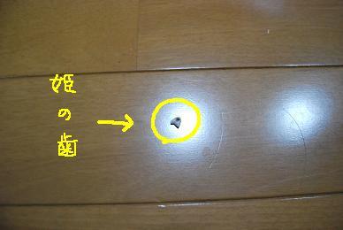 20091217DSC_3978.jpg