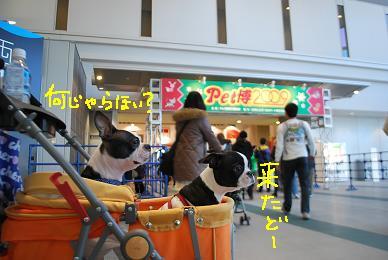 20091221DSC_4092.jpg