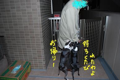 20100116DSC_4817.jpg