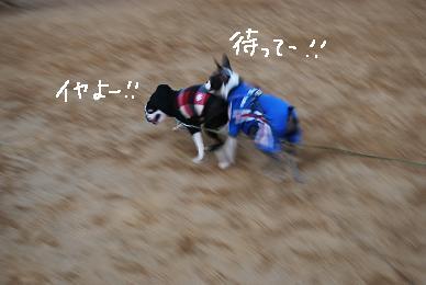 20100131DSC_5454.jpg