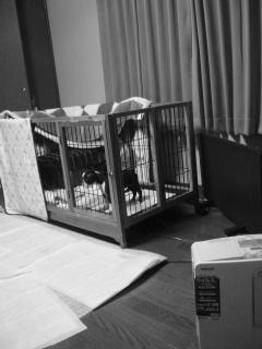 fukusuke's room