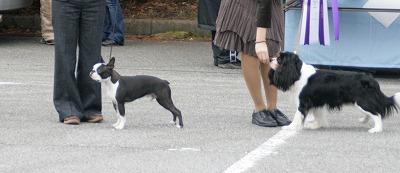 fukusuke2008/01/13 dogshow