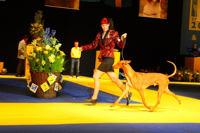 world dog show2008