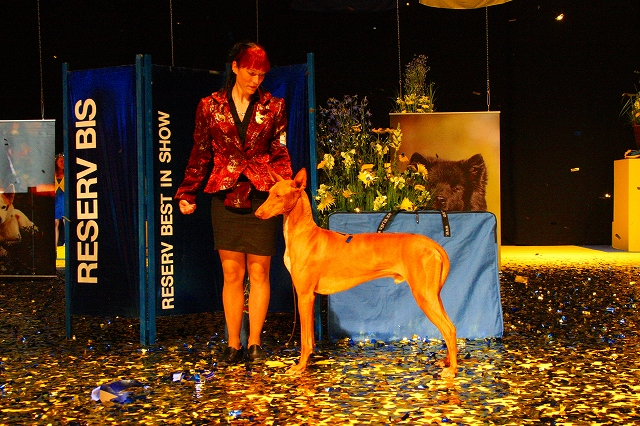 world dog show 2008