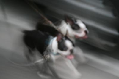 taraxfukusuke2007/08/runrun