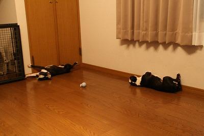 taraxfukusuke2007/08/xxx