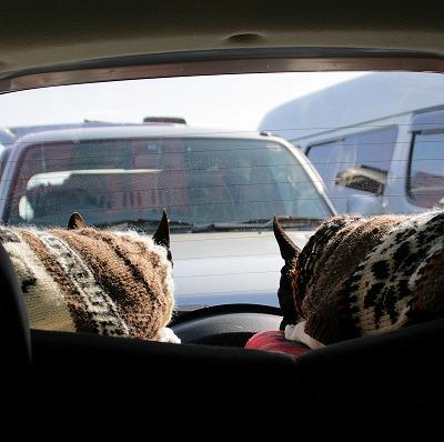 車の後ろでひなたぼっこ中