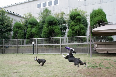 fukusuke2007/11/03