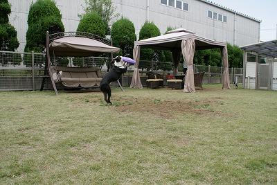 fukusuke2007/11/03x