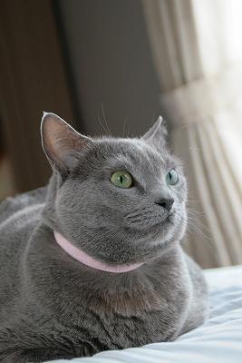 maoは広東語で猫の意味