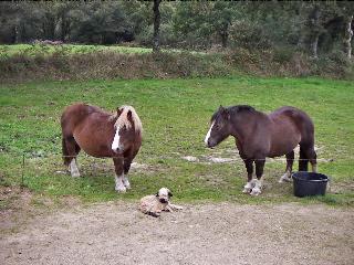 chevaux Oscar