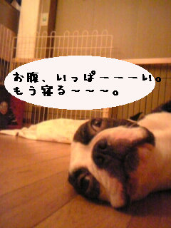 p-bun135-p.jpg