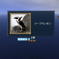 1002ケープペンギン発見♪
