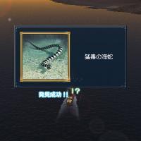 1002猛毒の海蛇発見♪