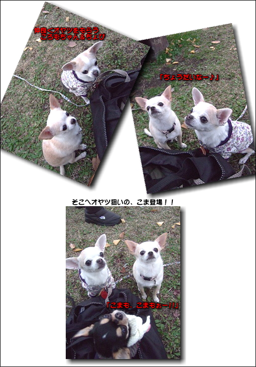 5_20100105040158.jpg