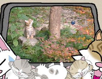 イラスト・写真の簡易合成:秋のお庭に…うにゃ?誰にゃ?