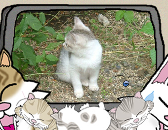 イラスト・写真の簡易合成:秋のお庭に…ミニミニ外1にゃん、うにゃ