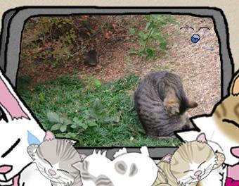イラスト・写真の簡易合成:秋のお庭できじにゃん毛繕い、うにゃ