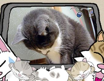 写真・イラスト簡易合成:お詫びをにゃん友達が♪猫大将にゃ♪