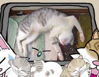 写真・イラスト簡易合成:ランボ~者の寝相にゃ…ひどいにゃ